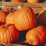 Fall Harvest Party Ideas Pumpkins